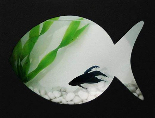 Beta aquarium for develop