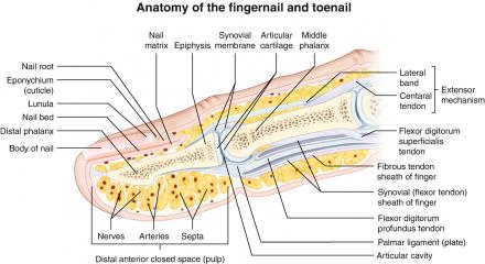 nail damage